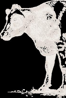 cow_lg